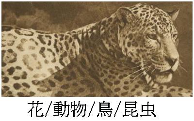 アンティークポストカード動物